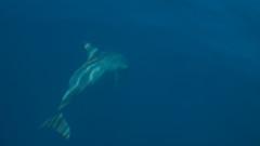 IMG_9709 (brian.b) Tags: philpipines palawan elnido bohol manila beach travel outdoor nature vacation pacific ocean