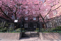 No 13 (Jaf-Photo) Tags: spring blossom cherry gate wideangle sony a850 sal1635z