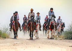 Rajasthan Safari (tourofrajasthan) Tags: safari rajasthansafari rajasthansafaripackages packages rajasthansafaricamp rajasthantigersafari travel trip rajasthan private tour operator camelsafari horsesafari jeepsafari elephantsafari rajasthantours delhi jaipur agra ranthambore pushkar jaisalmer udaipur shekhawati