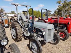 1955 Ferguson 35 Tractor (Five Starr Photos ( Aussiefordadverts)) Tags: masseyferguson35tractor masseyfergusontractor masseyferguson