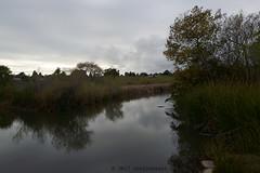 limberlost (nocklebeast) Tags: nrd santacruz scphoto ca usa walkl2080020 nearylagoon limberlost thegreatblackswamp