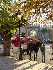 Boy tending a horse, view to Bab Belqari, Meknes, Morocco (Paul McClure DC) Tags: meknes meknès morocco almaghrib jan2017 animals horse people architecture historic