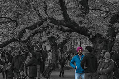 So ill, He's Sikh (Ken Cruz --- Fernweh) Tags: uw sakura streetphotography street college university universityofwashington people peoplewatching hdr nature outdoors pacificnorthwest spring asian asianway collegelife cherryblossoms selectivecolor sikh indian cool coolguy sunglasses turban blue fuschia