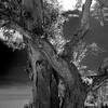 New life... (mehtasunil) Tags: spring newlife monochrome blackandwhite backlight springtine voigtlander leicalens leicaimages leicacamera leicaforum leicasl nokton40mm leicaworld redmatrix skancheli