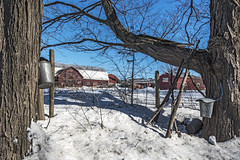 Sugaring Season (Flapweb) Tags: addisoncounty addison vermont sap buckets flag barn rural