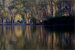 2017 04 09 Rhein bei Lorch 5D - 21 (Mister-Mastro) Tags: rhein rhine water wasser fluss river eau reflektion reflexion reflection bäume trees arbre spring frühling