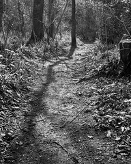 Path and tree shadow (Stanley Burn Woods) (Jonathan Carr) Tags: tree shadow abstract landscape rural northeast black white bw monochrome toyo45a 4x5 5x4 largeformat path