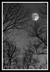 Starry Night (NaturalWondersByCariAnne) Tags: carianneslotterback naturalwondersbycarianne nwbc nwbcphotography naturephotography capemaycourthouse newjersey unitedstates us fullmoon bigdipper nightsky