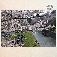(finalistJPN) Tags: hanami cherryblossom springscene springday sundayafternoon sunny daylight walking warmy airy discoverychannel nationalgeographic visitjapan tripjapan discoverjapan lonelyplanet planetearth japanguide japanphoto thankyoufriends