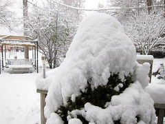 IMG_2814 (sjj62) Tags: s90 snow snowscape lith lakeinthehillsil winter winterscape