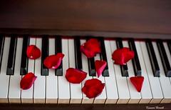Music {Explored on 13th April 2017} (kumherath) Tags: kumariherathphotography canon5dmark3 piano keyboard rosepetals ivory yamaha