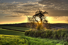 Sunburst 108/365 (rmrayner) Tags: sunsetthroughtreebranches sunburst countryside hedge spring fields 108365 365project 365daysof2017 365the2017edition