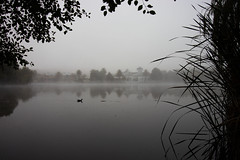 fog on the water (Daedalus-) Tags: fog water lake jerrabomberra nsw newsouthwales canberra canon canonefs1018mmf4556isstm canon80d 80d foggy grey greyscale silhouette reeds reflection lowvisibility