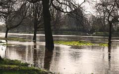 flooded york (Johnson Cameraface) Tags: 2017 march spring olympus omde1 em1 micro43 mzuiko 1240mm f28 johnsoncameraface york riverouse flood river yorkshire