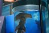 Under Lock & Key (Muhammad Galib) Tags: shark tank jar locked hammerhead