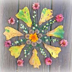 Spring In Autumn Mandala (DawnsRays) Tags: mandala