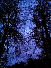 Evening autumn trees (Auxtessa) Tags: very gothic h