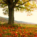 Magical autumn light