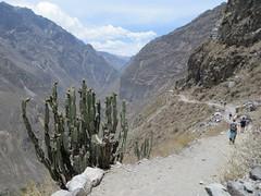 Colca Canyon-8