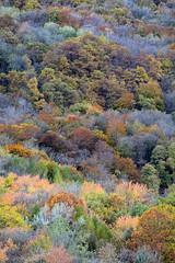 MYL_3640m (MILESI FEDERICO) Tags: wild nature colors alberi montagne automne nikon colore sigma natura piemonte dettagli autunno colori alpi montagna piedmont paesaggio valsusa mattino dettaglio nital cozie valdisusa milesi alpicozie d7100 chiusasanmichele visitpiedmont sigma150500 valliolimpiche nikond7100 milesifederico