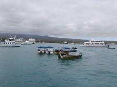 Galápagos - Santa Cruz-39