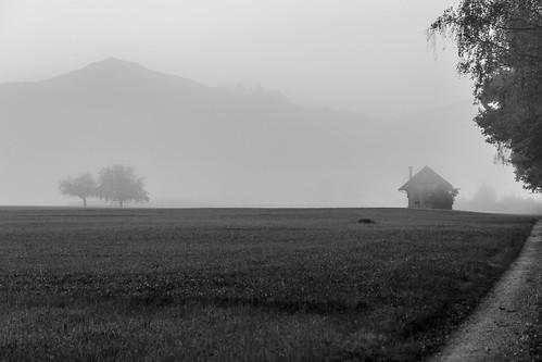 House of rising fog