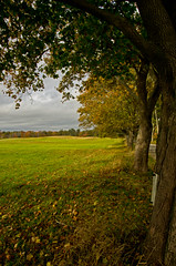 All In a Row (massbat (moved to Maine)) Tags: autumn trees maine newengland kennebunk parsonsbeach