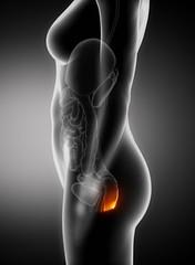 (arsyaa) Tags: black closeup female pain toilet medical problem health human xray medicine colon guts diarrhea hemorrhoids hemorrhoid annus lateralview