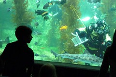 BAS Comic Con Dive Show_16