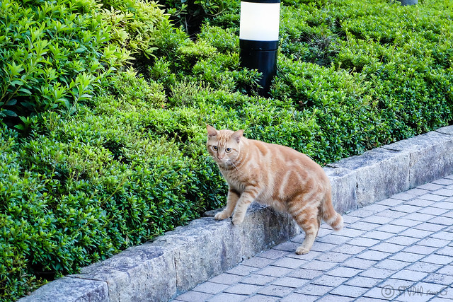 Today's Cat@2014-10-23