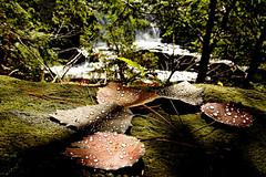 Stone Valley (Valerie Manne) Tags: fall nature moss seasons hiking adirondacks adirondack
