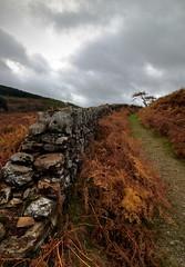 Drover's path (Rob Hurson) Tags: autumn ireland orange mountains colour fall countryside pentax cloudy hills ferns wicklow damp k30 pentaxk30 samsung1224mmf4