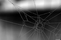 (Gav Justice) Tags: water spider droplets web waterdroplets