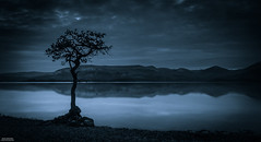 Tree @ Loch Lomond (Iain Brooks) Tags: sunset white lake seascape black mountains tree water night sunrise landscape scotland highlands nikon long exposure ben scottish iain loch lomond brooks lightroom d610 millarochy d7000