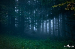 Conifres du Baracuchet (Summum Graphic) Tags: autumn halloween fog forest automne branches prairie brouillard fort mystique thrill bois feuilles frisson conifer isre voiron conifres mystrieux paysvoironnais portesdelachartreuse legrandvivier lebaracuchet