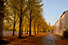 Skolgatan (Basse911) Tags: autumn trees houses oktober buildings suomi finland october watertower bluesky hanko nordic höst syksy vesitorni schoolstreet lokakuu hangö koulukatu skolgatan