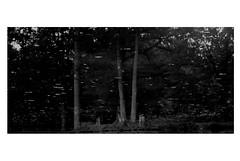 Songe de l'automne (J.Martin14) Tags: nature automne nikon noir reflet temps paysage arbre blanc feuille rverie