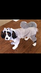 """Winston Ross all dressed for Halloween 2014 • <a style=""""font-size:0.8em;"""" href=""""https://www.flickr.com/photos/72564046@N04/15565593818/"""" target=""""_blank"""">View on Flickr</a>"""