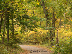 Early Autumn Path-Pocantico Hills NY (moelynphotos) Tags: autumn ny fallcolors newyorkstate westchester hudsonvalley moelynphotos
