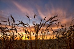 durum (journey ej) Tags: nd2015contest