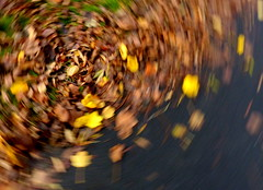 10 November 2014 - Abstract (penny_chicken) Tags: park abstract aberystwyth ceredigion leavesautumn