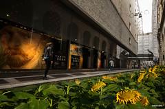 Van Gogh - Explore 22 oct 2014 # 117 (traboccoblu*) Tags: vangoghmilanogirasoli