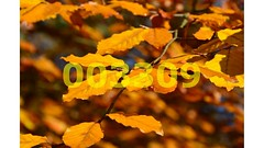 Flickr_003309 (lima_ho_htc) Tags: autumn forest golden eppingforest leaf epping thegalaxy franbanks rememberthatmomentlevel4 rememberthatmomentlevel1 rememberthatmomentlevel2 rememberthatmomentlevel3 rememberthatmomentlevel7 rememberthatmomentlevel9 rememberthatmomentlevel5 rememberthatmomentlevel6 rememberthatmomentlevel8 rememberthatmomentlevel10