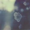 blue morning (davebias) Tags: film polaroid sx70 impossible polaroidweek