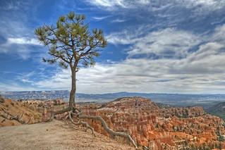 Bryce Canyon Survivor