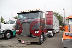 352 Cattle Hauler (RyanP77) Tags: show wheel truck cattle dump semi chrome rig pete heavy stockton tanker peterbilt 389 359 hauler cabover 388 379 352 daycab