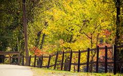 Black Rock Mountain State Park, GA (Sam & Sophie Images) Tags: leica travel autumn fall leaves ga leaf sony scene blackrockmountainstatepark