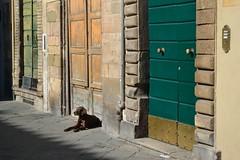 Lucca 2014 (Olga Sytykh) Tags: street italien italy dog tree cane october warm doors lucca sunnyday greendoor toskana 2014 イタリア солнце собака улица день италия luccaitaly двери freephotos luccaitalia threedoors лукка ルッカ тоскана зеленаядверь nikond3100 тридвери トスカナ