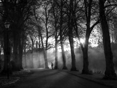 dawn avenue (Mike Ashton) Tags: morning trees mist sunrise dawn shropshire riverside path walk olympus shrewsbury avenue limes em1