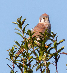_C5A2477.jpg (Lake Worth) Tags: bird nature birds animal animals canon wings wildlife feathers sigma waterbird wetlands everglades waterbirds southflorida 2xextender